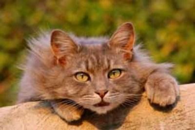 Qué causa estrés y ansiedad en los gatos