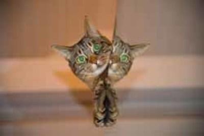 ¿Cómo evitar que el gato marque con orina?